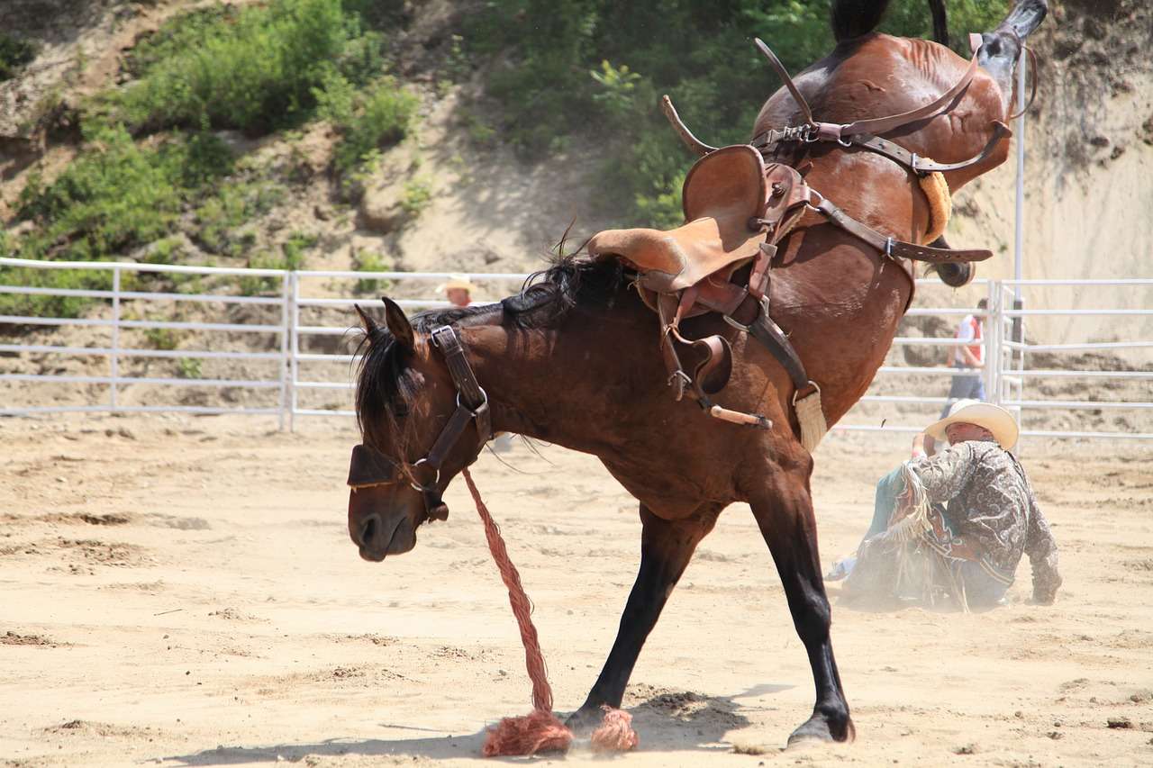 rodeo-3766990_1280